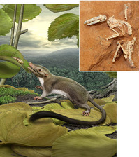 Archivo:First_placental_mammal.png‎